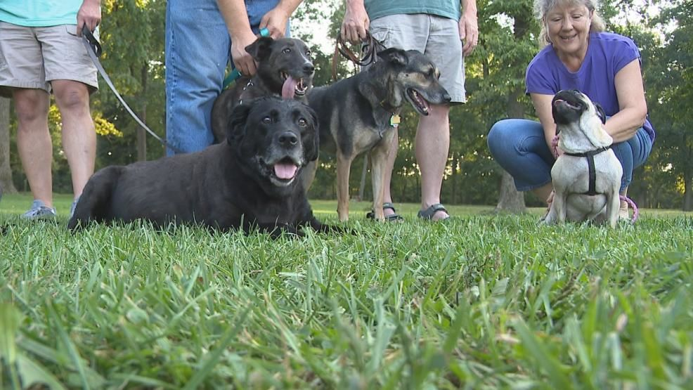 Dog owners and police in Bucyrus are working together on a new neighborhood watch program, to empower dog walkers to keep an eye out for problems (WSYX/WTTE)