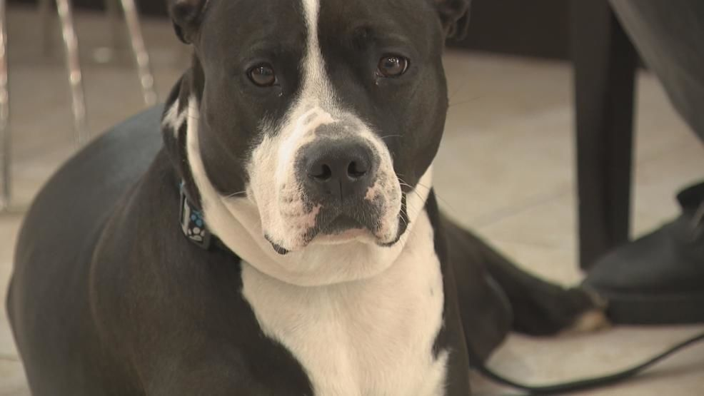 <p>A marine has stepped up to help a Vietnam veteran whose eviction scare centered around his dog. Willie Williams faced possible eviction after receiving a letter from an attorney that he was told to keep his dog, Diamond, on a leash but didn't. (WSYX/WTTE){&nbsp;}<br></p>