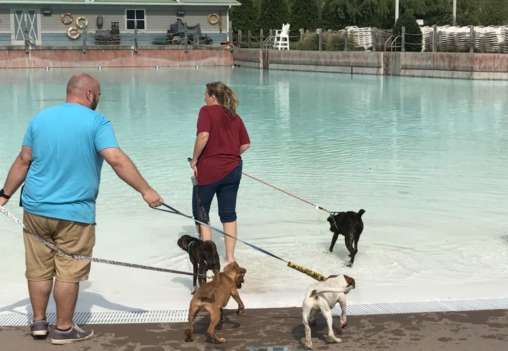 Nashville Shores Waterpark hosting Second Annual Pooch Pool Plunge. PHOTO: Nashville Shores